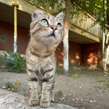 Милый котенок в добрые руки, девочка, 5 месяцев