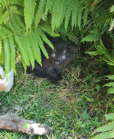 Котята ишут хозяев