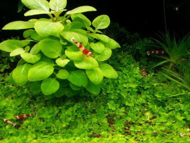 Pachet plante acvariu