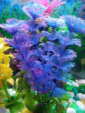 Оквариумные водоросли