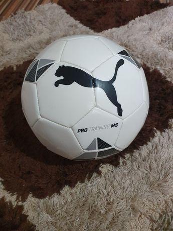 Minge Puma