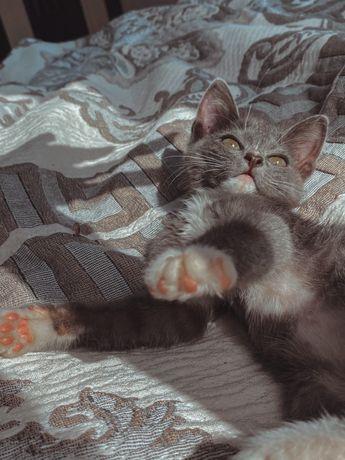 Пристраиваем милого котенка только в добрые руки