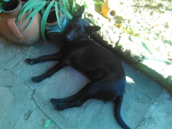 Издирва се откраднато куче!!!