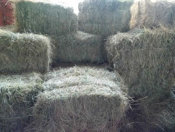 Продаются сено тюках продам рулонами сено люцерная сено