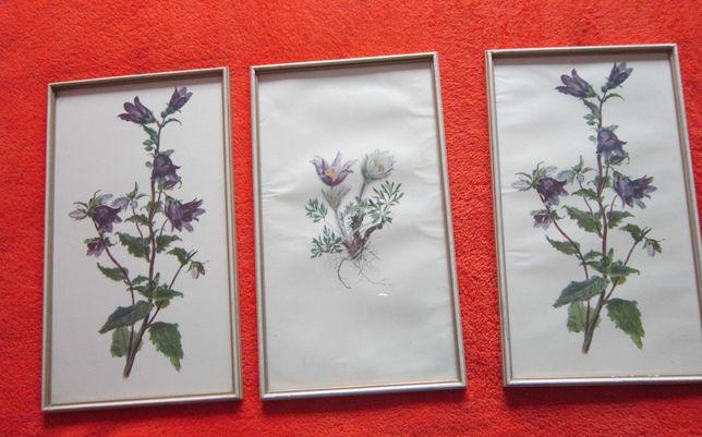 tablou botanic,vintage, 3 aceease serie,rame lemn,made Austria