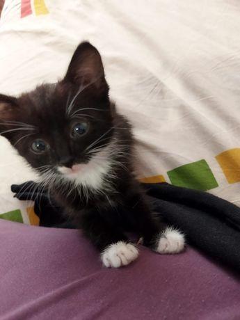 Отдам в добрые руки котёнка девочку