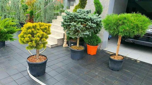 Plante ornamentale pentru o gradina specială