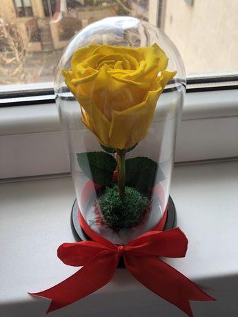 Trandafir galben criogenat conservat in cupola cristalina