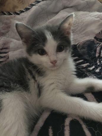 Отдам котенка 2-3 месяца
