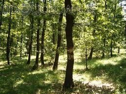 Продавам 23,4 дка гора/със земята/ в с. Елов дол/Сф/.