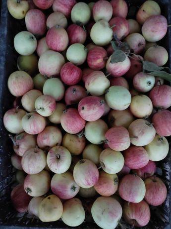 Яблоки домашние.