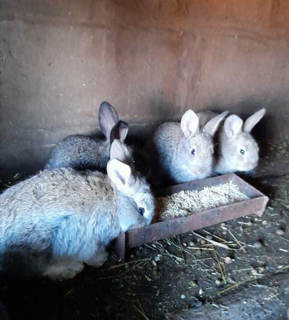 Продам кролят разного возраста