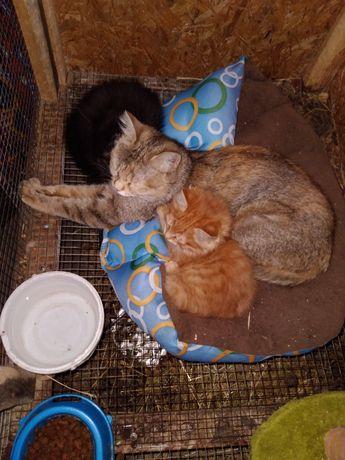 Отдадим кошек и котят в добрые руки