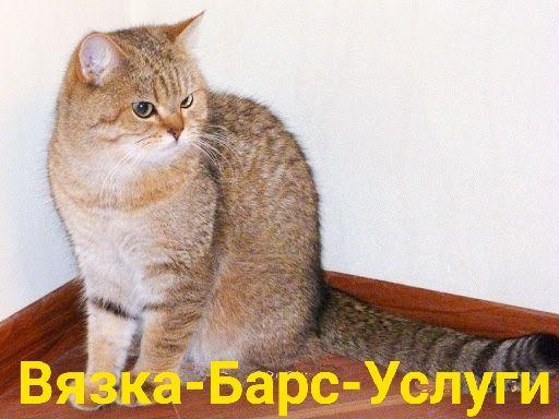 Вязка-Барс-Услуги