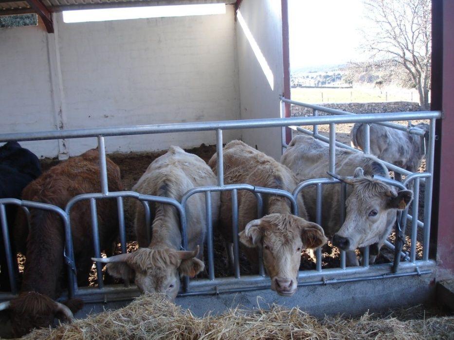 Autocaptura pentru bovine cu coarne (5 - 7 posturi)
