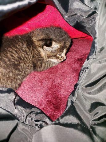 Котенок           2 недели