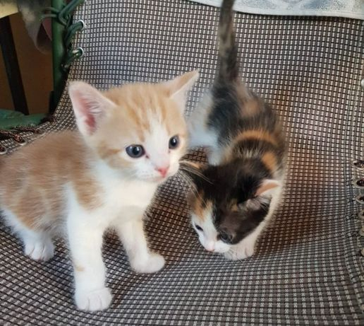 Отдам котят в хорошие, добрые руки!!!