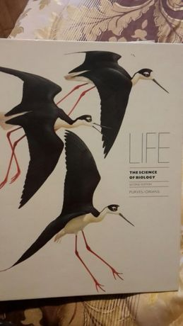 Life: the science of biology, second edition