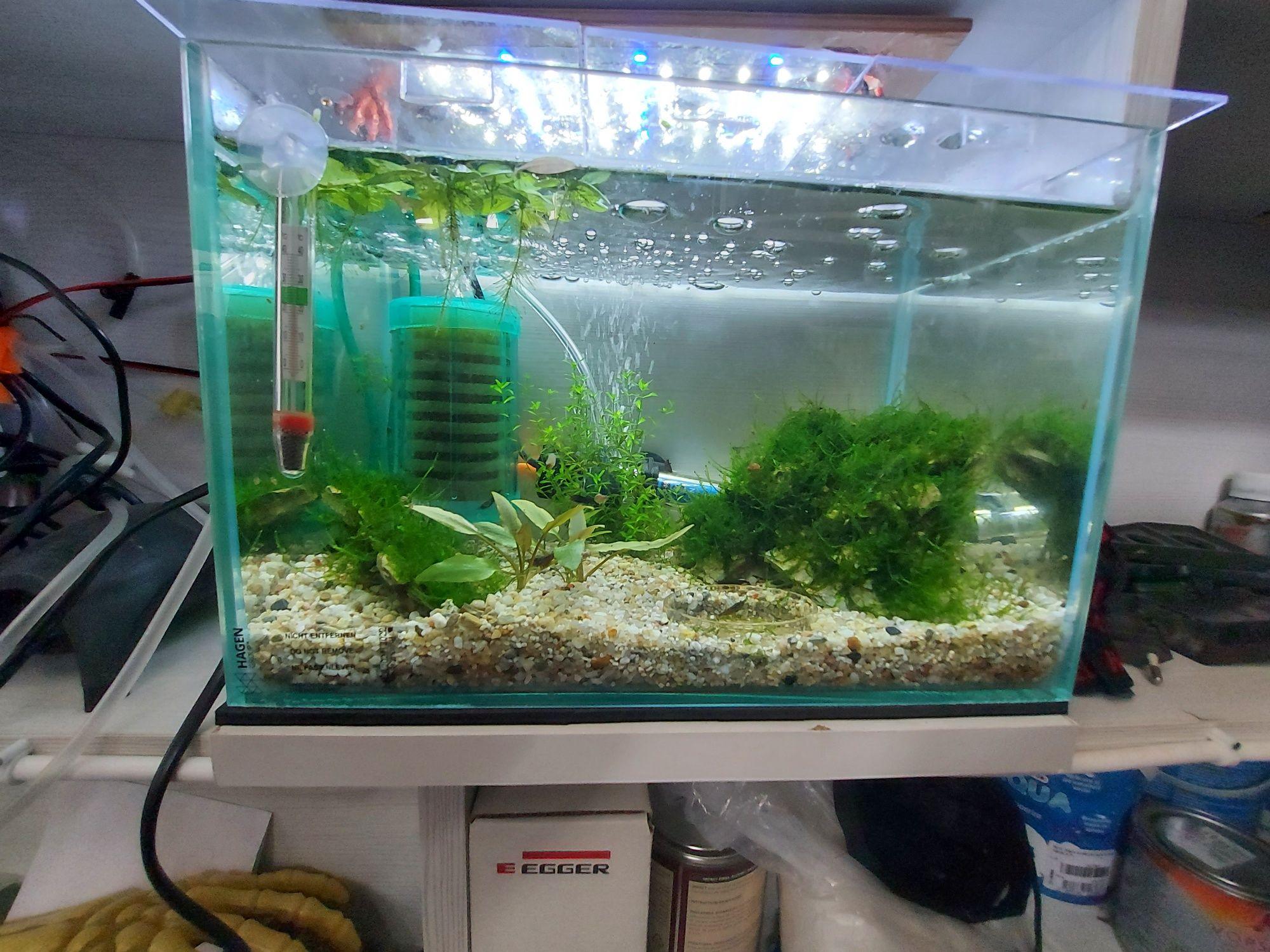 Ornamente din piatra sau vita de vie pentru acvarii, acoperite cu moss
