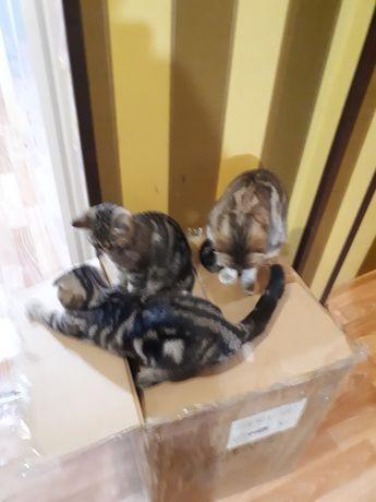 Котята, ласковые и игривые