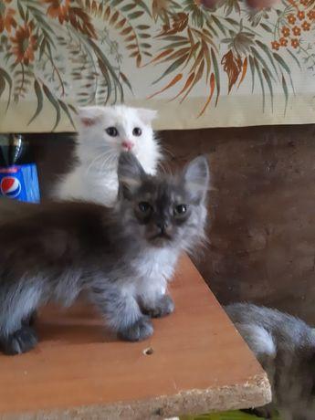 Животные котята.