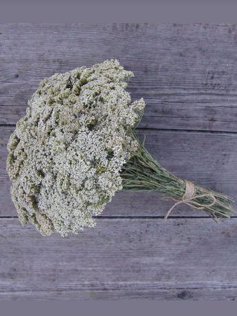 Букет тысячелистник (сухоцвет)