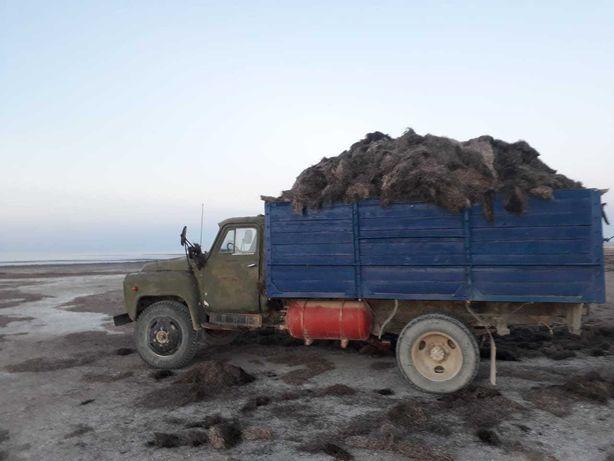 Шалан морская водросль продаём
