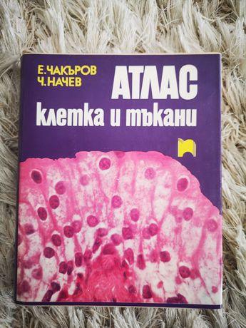 Атлас клетка и тъкани