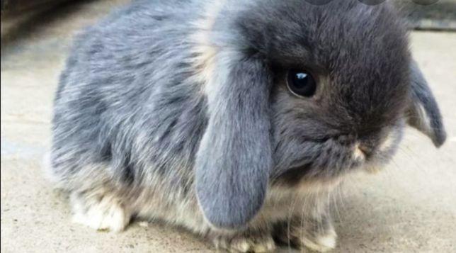 Продам малыша декоративного кролика