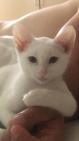 Дрессированный котенок Добби ищет семью