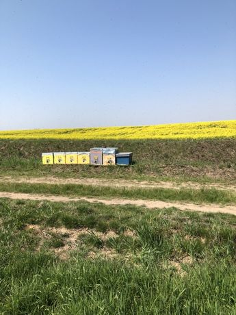 Vand familii de albine, Lazi, schimb cu utilaje tractor japonez 27 cai