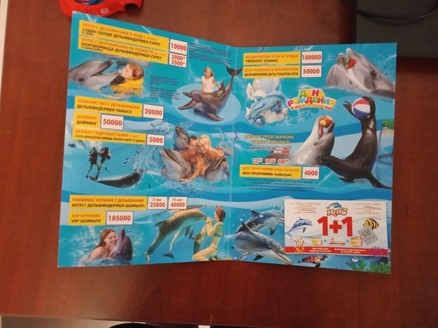 Билет на дельфинарий на 12 срок сентября