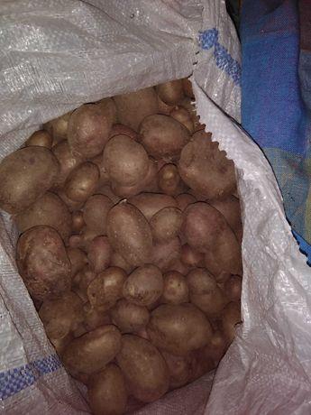 Vind cartof pt animale