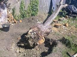 Выкорчевывание деревьев, кустов.