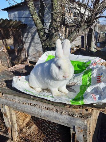 lichidez ferma iepuri