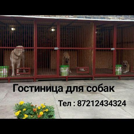 Гостиница-передержка для взрослых собак, 3.000тн/сутки