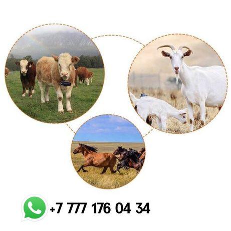 GPS трекер для лошадей/Малға GPS