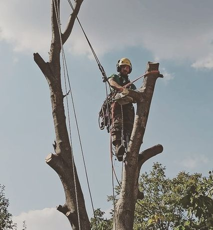 Премахване на опасни дървета, оформяне короната на вашето дърво - АРБО