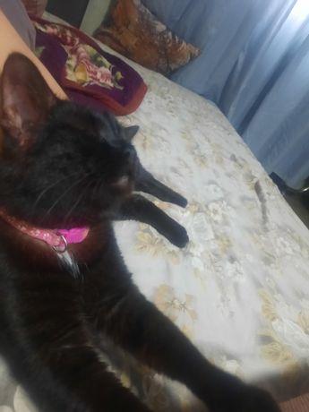 Найдена кошка возле Крылова 112