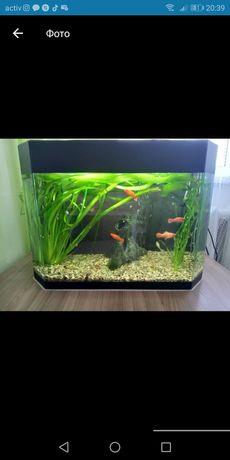 Продаю аквариум с рыбками прекрасный подарок