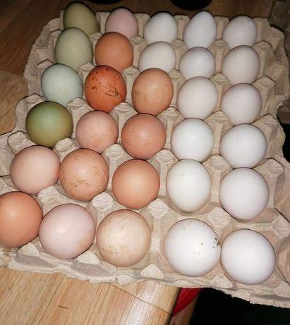Oua de gaina crescute doar cu graunte