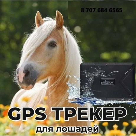 Жылкы Онлайн Бакылау/GPS Навигатор для Лошадей Местоположение в Актау