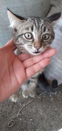 Котята девочки 2