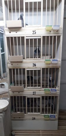 Boxe porumbei -matcă individuale