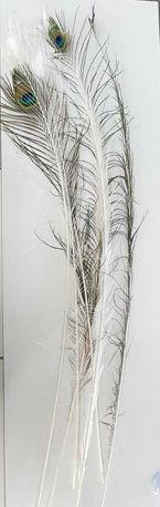 Перья павлинов - синие и белые