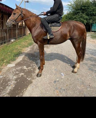 Айгыр жеребец ат жылкы лошадь конь