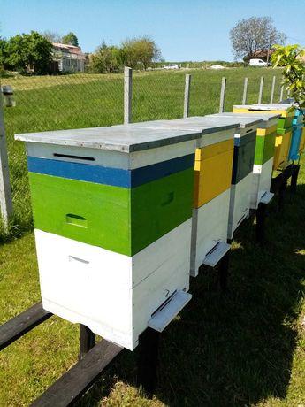 Vând lăzi, stupi albine pe 12 rame