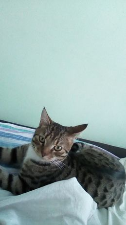 Пропал кот, село Мичуринское