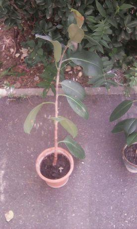Planta decorativa pentru interior