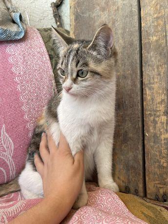 Отдам кошек в хорошие руки